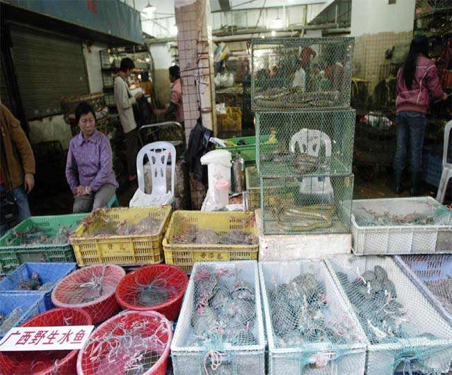 Image ofChina-has-not-improved-with-the-corona-epidemic-bats-and-pangolins-are-being-sold-again-in-the-market
